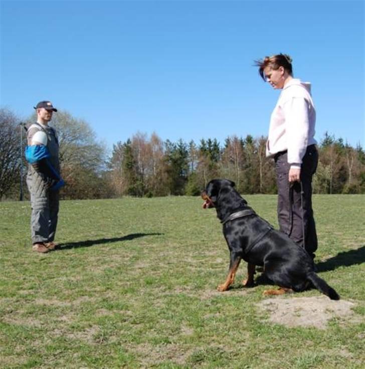 Rottweiler Chaco - chaco og Sanne 2008 billede 9