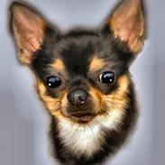 Chihuahua                   Zubin