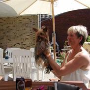 Yorkshire terrier Benjamin vom Autal