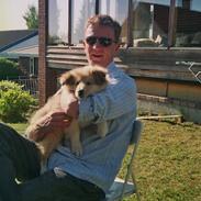 Collie langhåret Simba