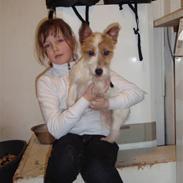 Jack russell terrier Molly solt savner dig :(