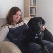 Labrador retriever Scooby