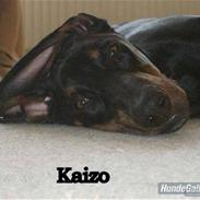 Dobermann Kaizo