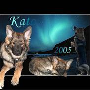 Schæferhund Kato R.I.P. 28-02-2011