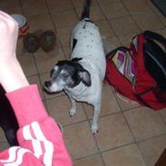 Dansk svensk gaardhund Luna (R.I.P) :'C Savnet!