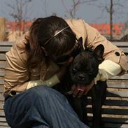 Fransk bulldog Bertram 2