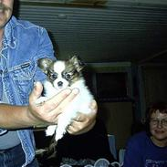 Papillon Lucky Dog Unibella of Evi