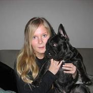 Fransk bulldog BUSTER