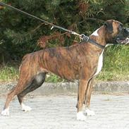 Boxer Equitta