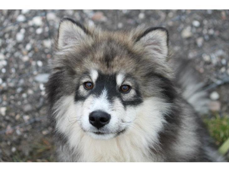 hunde forum emne godkendt til avl