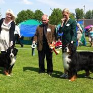 Berner sennenhund BAILEY HIMMELHUND <3