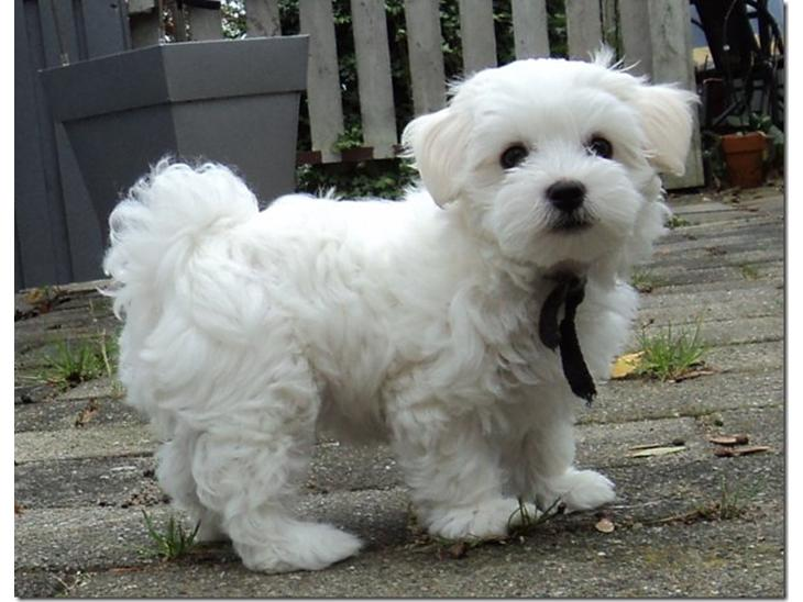 hunde forum Hvalpe emne hundepension og hvalp