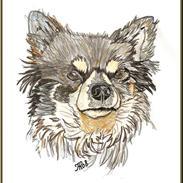 Chihuahua Lynet (Maxie 9år d.8 MAJ 2012 blev han