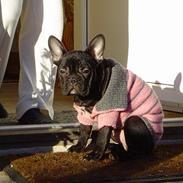 Fransk bulldog mathilde(aga monstras)