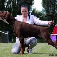 Dobermann Royal Danish Baronesse von Blixen