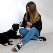 Border collie og labrador -Bailey