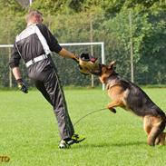 Schæferhund Team Dika's Extra ( Nova )