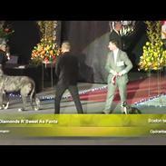 Boston terrier West Lund Diamonds R' Sweet AS Fanta aka Fanta