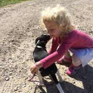 Dansk svensk gaardhund Ezio