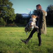 Australian shepherd Louis Vuitton (Milo)