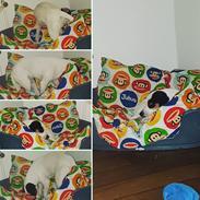 Dansk svensk gaardhund Uffe