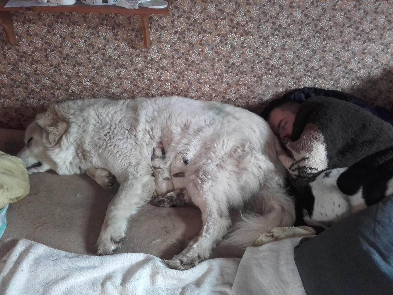 Pyreneerhund My billede 3