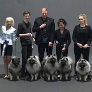 Keeshond Asdis - House of Keesgaard A Silver Past