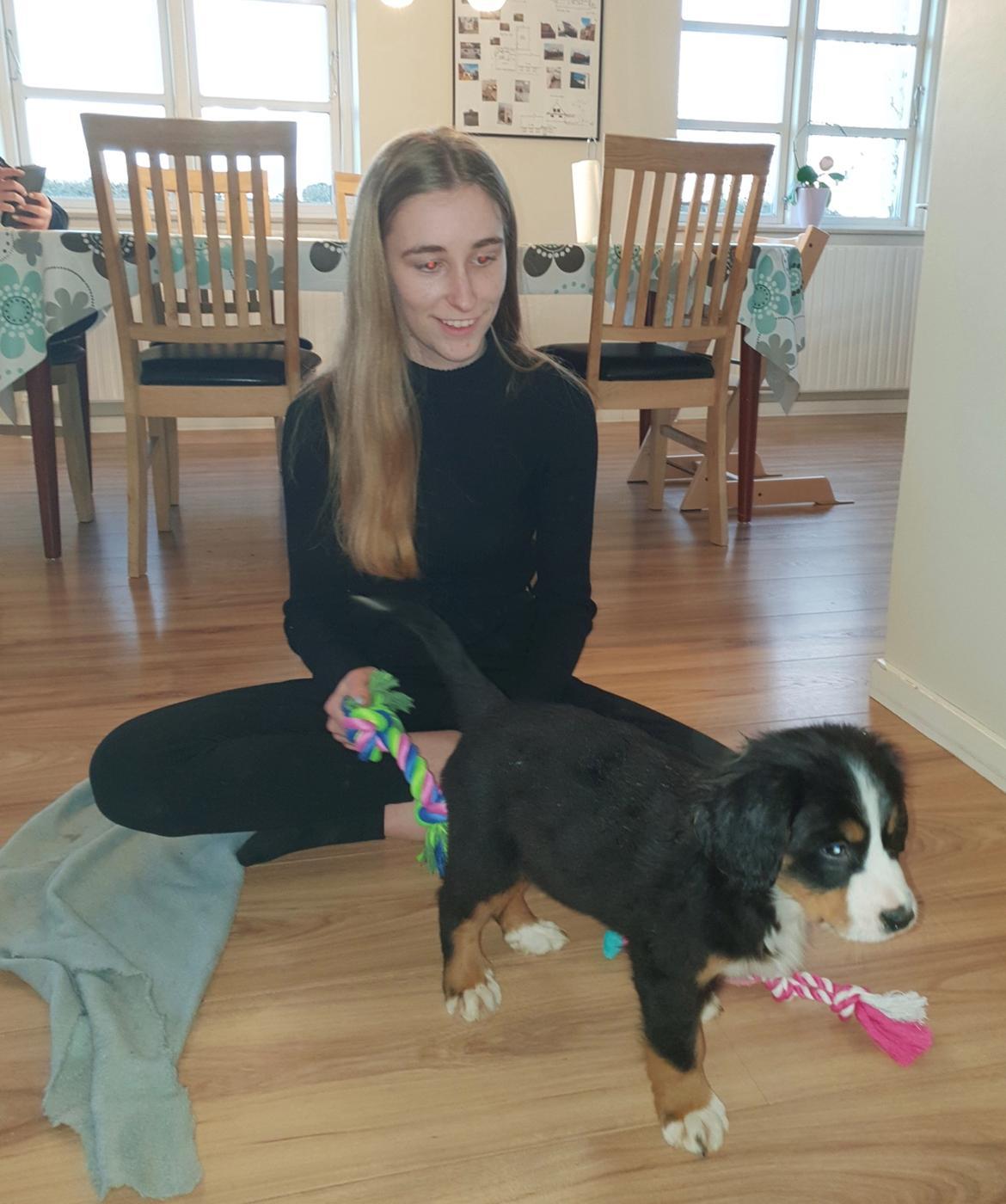 Berner sennenhund Toffie - Inde for og teste mit legetøj billede 11