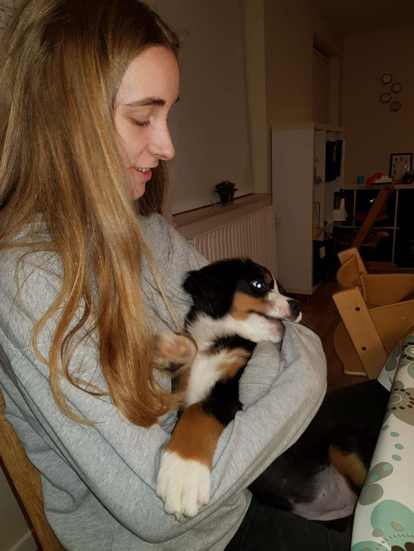 Berner sennenhund Toffie - min yndlings ting er at drille min mor :p billede 33