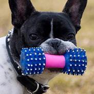 Fransk bulldog Vuck Stinkdyret