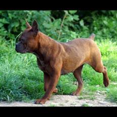 Chinese chongqing dog yam yam