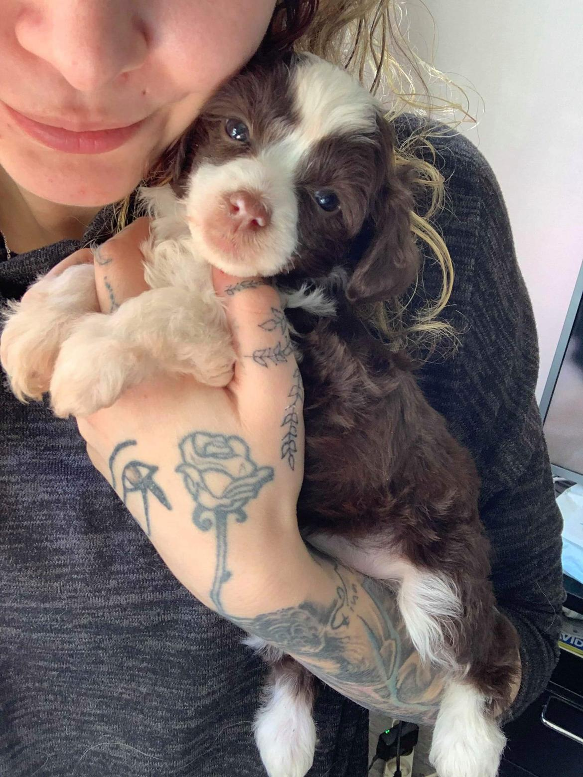 Chinese crested powder puff Nyx billede 1