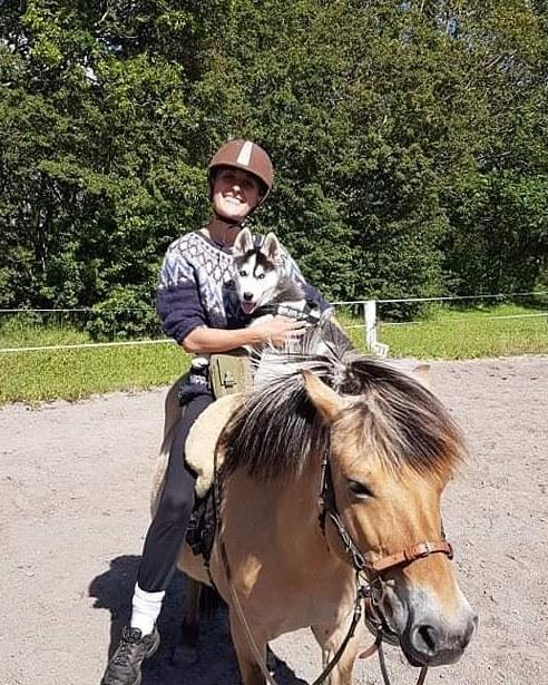 Siberian husky Koda billede 9