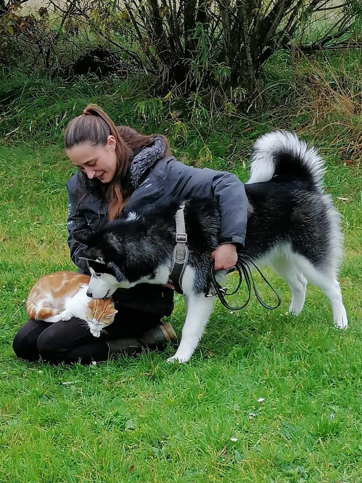 Siberian husky Koda billede 17