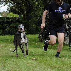 Greyhound Azul