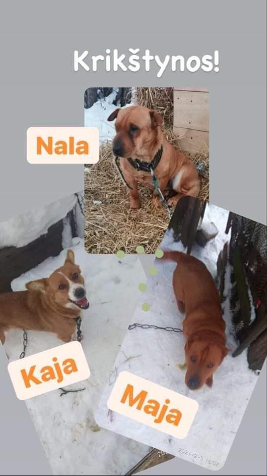 Blanding af racer Echo - Echo (Maja) og hendes 2 søstre fra den dag de blev reddet billede 9