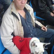 Fransk bulldog Frykas Baflo (FIGHTER)