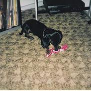 Gravhund Rufus (Agry) *R.I.P.*