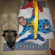 Dogo canario Fiona