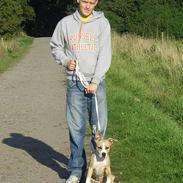 Amerikansk staffordshire terrier Xena