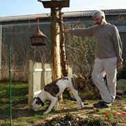 Amerikansk bulldog Mathilde