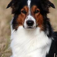 Border collie Jamie (R.I.P)