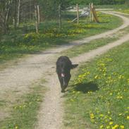 Blanding af racer Basse (1994-2007)