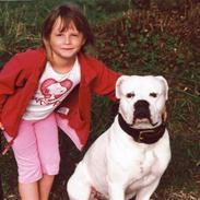 Amerikansk bulldog sonneholts rommel(don)