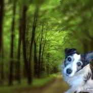 Jack russell terrier Eddie Spaghettie *R.I.P*