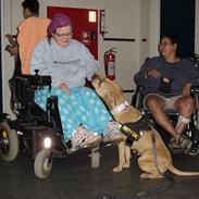 Amerikansk staffordshire terrier Gucci *Himmelhund*
