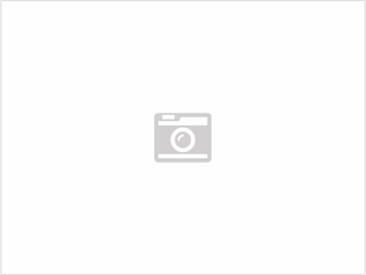 Coton de Tulear - Bomuldshund
