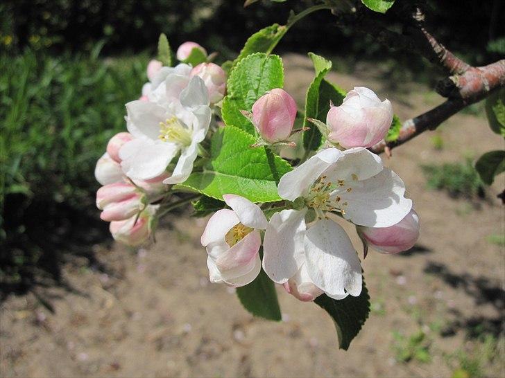 Blomsterbilleder - Off Topic - Fotos fra Cecilie P
