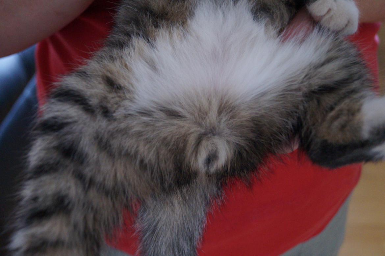 Køn på killinger - Diverse kat - Fotos fra brita j