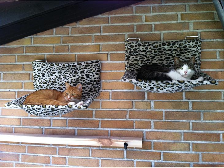 Hygge i haven   diverse kat   uploadet af mmajken